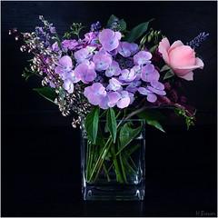 Sommerblumen (h.bresser) Tags: blumenstraus hbresser hartmutbresser sommerblumenstraus bouquet bouquetofflowers farben colors flowers blumenvase vase blau blue