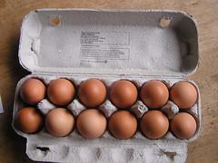 SuperValu Daily Basics 12pk Eggs 1.99 her 29082016 11-08-2016 - Box open (Lord Inquisitor) Tags: supervalu daily basics heneggs hen eggs eggbox eggcarton 29082016