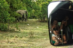 Magical to see these amazing animals, especially when it's right next to your tuk tuk. #paradisefound #srilanka #srilankan #srilankatravel #visitsrilanka #srilankatrip #srilankatoday #srilankatourism #travel #trip #roundtheworld #worldtrip #travelpics #tr (oetsie) Tags: trip travel its animals see amazing right next your backpacking when srilanka lonelyplanet these backpacker magical tuk especially srilankan roundtheworld worldtrip travelphotography travelpics paradisefound backpackingasia traveladdict srilankatrip backpackerlife srilankatravel srilankatourism srilankatoday travelporn visitsrilanka backpackingadventures backpackingdream