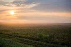 Misty dawn (Dmitriy Fomin) Tags: outdoor nature flowers fly sun sunset dawn