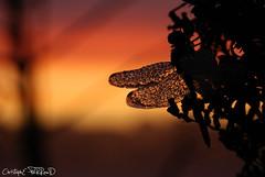 Ailes de diamants (christophe.perraud.44310) Tags: animaux anisoptres ciel eau gouttes levdesoleil libellules macro odonates rose insectes nature wildlife contrejour