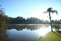 IMG_6821 (rafaeldeoliveira) Tags: curitiba paran brasil inverno winter geada freeze gelo parquebacacheri canon canoneosrebelt2i