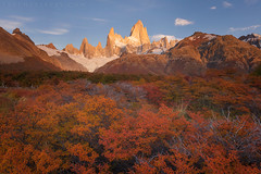 Fitzroy (terenceleezy) Tags: patagonia argentina chile southamerica fitzroy torresdelpaine fallcolors autumn