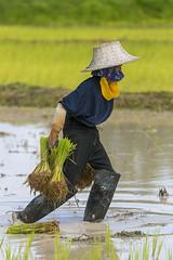 ChiangRai_2738 (JCS75) Tags: asia asie thailand thailande canon chiangrai