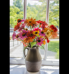 Pitcher of Flowers (J.L. Ramsaur Photography) Tags: jlrphotography nikond7200 nikon d7200 photography photo cookevilletn middletennessee putnamcounty tennessee 2016 engineerswithcameras cumberlandplateau photographyforgod thesouth southernphotography screamofthephotographer ibeauty jlramsaurphotography photograph pic cookevegas cookeville tennesseephotographer cookevilletennessee godsartwork naturespaintbrush pitcherofflowers colorful colors color flower flowers flowerpetal pinkflower purpleflower yellowflower orangeflower nature naturesbeauty pickedflowers window windowsill flowersinawindow dof depthoffield bokeh
