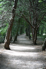 Path through Trees (Dark Dwarf) Tags: holiday august 2016 walmer castle kent trees path