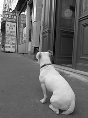 (Camusi) Tags: europe fall automne september septembre france paris city ville dog chien sidewalk trottoir