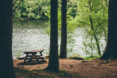 A Place to Rest (freyavev) Tags: sweden sverige schweden gothenburg gteborg lake bokeh lakedelsjn delsjn 50mm mikasniftyfifty niftyfifty trees forest water bench outdoor hiking