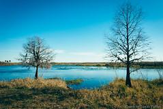 Seminole Ranch (corran105) Tags: rural country stjohnsriver floodplain brevard river water landscape blue sky bluesky vibrant colorful color classic retro vsco vscofilm seminoleranch hatbillcountypark polarizer nature scenic swamp marsh wetland