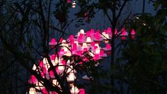 Candles floating on Tlnlahti to remember victims of Hiroshima & Nagasaki atom bombs (hugovk) Tags: hvk cameraphone uploaded:by=email candles floating tlnlahti remember victims hiroshima nagasaki atom bombs candlesfloatingontlnlahtitoremembervictimsofhiroshimanagasakiatombombs geo:country=finland uusimaa helsinki finland geo:region=uusimaa takatoolo geo:neighbourhood=takatoolo geo:locality=helsinki geo:county=helsingin helsingin exif:flash=offdidnotfire exif:aperture=24 exif:exposure=125 camera:model=808pureview exif:isospeed=250 camera:make=nokia exif:orientation=horizontalnormal meta:exif=1475092803 exif:exposurebias=0 exif:focallength=80mm nokia 808 pureview carlzeiss nokia808pureview hugovk summer 2016 august kes