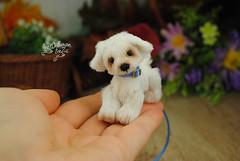 goober09 (Zhanna Zolotina) Tags: miniature dog ooak handmade toyzz tinydolhousetoyzz altair teddy bear dollhouse puppenhaus blythe