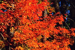2016_1005Autumn-Colors0002 (maineman152 (Lou)) Tags: fall fallfoliage fallfoliageseason autumn autumncolors changing changingcolor leaveschangingcolor leavesturning leavesturningcolor nature naturephoto naturephotography october maine