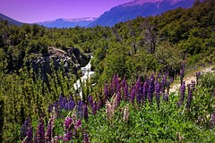 IMG_9611 Flowers, cascade and mountains (Rodolfo Frino) Tags: tree trees nature landscape mountain mountains hills bush sky cloud indigo violet blue
