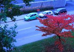 Redder every day (IamWadidiz) Tags: autumn autumnleaves autumnred windowphoto windowshot sonya7 rodenstock rodenstockheligon vintagelens classiclens