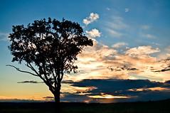 Am Abend (berndtolksdorf1) Tags: abendstimmung lichtstimmung sonnenuntergang baum himmel farben landschaft landscape colors outdoor