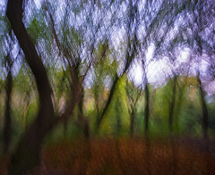 Autumn (manphibian) Tags: abstract art autumn trees wood woods forest calm long exposure moving motion
