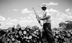 Josias (joaobambu) Tags: wood blue sky clouds rural truck work topv333 farm working photojournalism 2006 nuvens worker tao cutter loading fazenda woodsman lenha eucalpytus fotojornalismo taoteching josias countryise