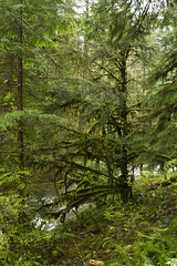Silver Falls State Park (Anna Calvert Photography) Tags: water oregon forest moss spring stream unitedstates silverton hiking trails waterfalls rivers salem silverfallsstatepark ferns tenfalls tenwaterfalls