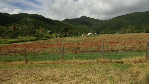 Antigua (Caribbean Island)