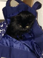 Poussy le chaton dans mon sac  (EmmaVdc3) Tags: cats cute animals happy kitten kat chat sac kitty lovely chaton