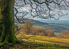 Tree with a View, Cotswolds, Gloucestershire