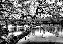 Tree Stretching Into the Haw (cwhitted) Tags: blackandwhite bw canon eos blackwhite hdr bynum hawriver chathamcounty canoneos400d canoneosdigitalrebelxti bynumbridge canonefs1855mmisstm bynumbeach