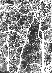 Bosque neuronal con espritus. Neuronal forest with ghost. (Esetoscano) Tags: bw byn forest creativity ghost bn fantasy bosque creatividad handdrawing fantasa neuronas espritus nimas dibujoamano neuronalbranches ramificacinneuronal neuronsrboldendrtico dendritictree