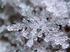 Schneestern (Etoshas Pfanne) Tags: schnee winter snow macro ice crystal eis naturmakro