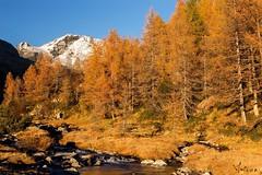 Predarossa autumn (jibbajambs) Tags: autumn trees sunset red italy mountain alps tree ice sunshine river autunno alp alpi montagna valtellina sondrio disgrazia valmasino larici 500px ifttt