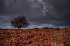 upon a walk (rich lewis) Tags: sky tree landscape bracken richlewis