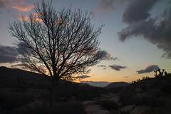 Bonnie Springs Sunrise (magnetic_red) Tags: tree sunrise desert nevada bluehour barren americanwest firstlight clearingstorm