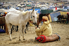 Man with horse (SamaraCroci) Tags: morocco marocco weddings matrimoni berberi imichil