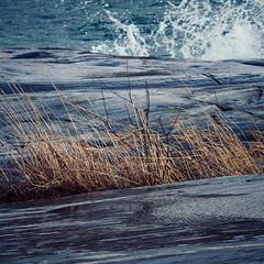 (miemo) Tags: winter sea nature wet water finland reeds helsinki rocks europe waves olympus telephoto omd uunisaari em5 panasonic100300mm