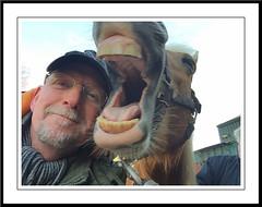 Pret met sarah (gill4kleuren - 11 ml views) Tags: horse sarah fun saar paard haflinger orse