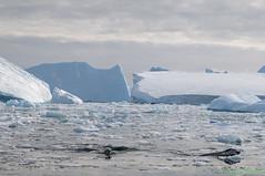 L1003223 (Roy Prasad) Tags: ocean leica travel cruise sea mountain snow reflection ice expedition water rock landscape island penguin boat gentoo ship antarctica glacier iceberg zodiac prasad elmar vario adelie varioelmar s006 pleneauisland pleneau royprasad 3090mm styp006 type006