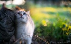 Sunrise a7 cats (matty666117) Tags: