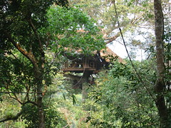 Treehouse High in the Forest