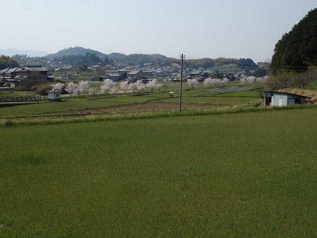 20140408 飛鳥@奈良