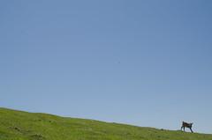 _DSC4414 (adrizufe) Tags: mugarrikolanda durangaldea basquecountry blue green txala nature lovenature ilovenature nikonstunninggallery nikon d7000 ngc bizkaia adrizufe adrianzubia aplusphoto