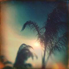 Under Palms (BLACK EYED SUZY) Tags: trees summer sun hipstamatic afterlight light palmtrees