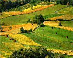 Spring field (Katarina 2353) Tags: film landscape spring nikon europe serbia srbija katarinastefanovic katarina2353