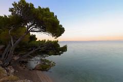 IMG_1494 (Siuloon) Tags: tree beach sunrise croatia chorwacja adriatyk drzewo plaa drzewa wschdsoca bakavoda