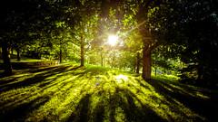 Summer sunset at home (Luis Marina) Tags: pueblo bosque contraluz atardecer verde arboles sol siluetas paz serenidad tranquilidad wood backlight silhouette green sun sunset peace cantabria santander espaa es