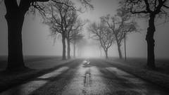 Road to nowhere II (Jaques10000) Tags: nikon d5100 havelland landscape landschaft monochrome blackwhite longexposure trees mist dark