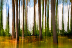 Abstract Forest 3-0 F LR 7-14-16 J078 (sunspotimages) Tags: trees abstract tree nature forest landscape artwork artistic misc