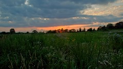 Tallmadge Meadow at Sunset (jwroach) Tags: sunset tallmadge meadows summit metro parks trails outdoors nature wildlife north east ohio orange sun clouds flowers grass highlights