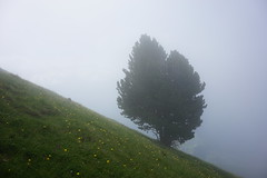 Piz Pic (inge.sader) Tags: landschaft landscape südtirol altoadige adige gröden seceda pizpic valgardena natur sonyalpha7ii sony