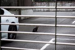 Today's Cat@2016-08-09 (masatsu) Tags: cat catspotting thebiggestgroupwithonlycats pentax mx1 osaka