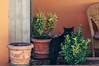 Black Cat (matteo.vannacci) Tags: gatto nero black cat blackcat gattonero