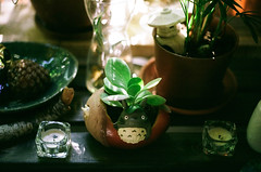Little garden (inmost_light) Tags: garden balcony gardening pinecone totoro film analog analogue 35mm green plants
